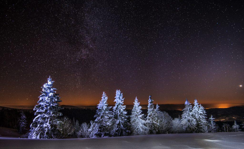 Mesmerizing night landscape snowy fir trees